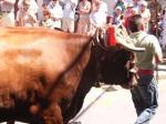 Bull getting pushy